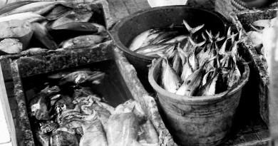 pelelangan_ikan